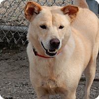 Adopt A Pet :: Max - Long Beach, NY