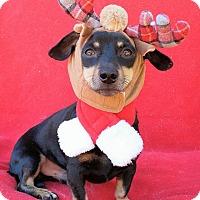 Adopt A Pet :: Higgins - Charlotte, NC