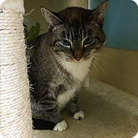 Adopt A Pet :: Southern Beau - Newburgh, IN