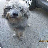 Adopt A Pet :: FOZZIE - Panama City, FL