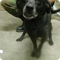 Adopt A Pet :: Bailey - Saginaw, MI
