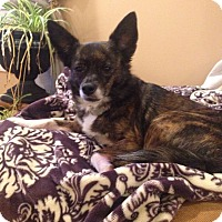 Adopt A Pet :: Princess - Huntsville, AL