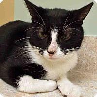 Adopt A Pet :: Tara - Hinsdale, IL