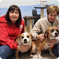 Adopt A Pet :: Hazel - Elyria, OH
