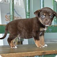 Adopt A Pet :: Hewey - San Antonio, TX