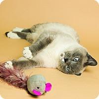 Adopt A Pet :: Emma - Wheaton, IL