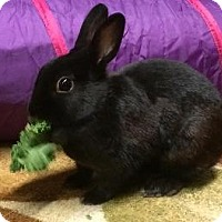 Adopt A Pet :: Zelda - Woburn, MA