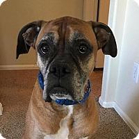Adopt A Pet :: Banks - Denver, CO