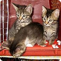 Adopt A Pet :: Austin - Dallas, TX