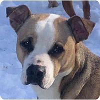 Adopt A Pet :: Peggy - Jacksonville, FL
