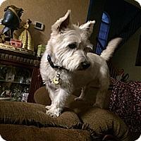 Adopt A Pet :: Sam - Carrollton, TX