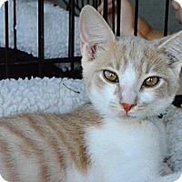 Adopt A Pet :: Charlie - Temecula, CA