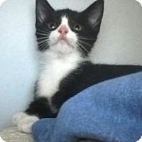 Adopt A Pet :: Dora - Kirkwood, DE
