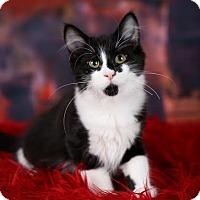 Adopt A Pet :: Renaldo - Plymouth, MN