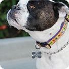 Adopt A Pet :: ZUMA