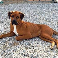 Adopt A Pet :: Henry - Rancho Cucamonga, CA