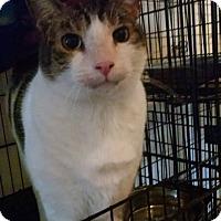 Adopt A Pet :: Maverick - Walla Walla, WA