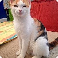 Adopt A Pet :: Kairi - Denver, NC