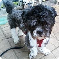 Adopt A Pet :: Snoopy - Jacksonville, FL