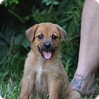 Adopt A Pet :: Calypso - Groton, MA