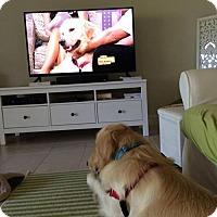 Adopt A Pet :: Russo 687 - Naples, FL