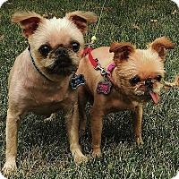 Adopt A Pet :: BOB & OLIVIA near KANSAS CITY - Overland, KS