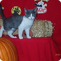 Adopt A Pet :: Aphrodite - Lancaster, CA