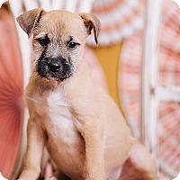 Adopt A Pet :: Sammy - Portland, OR
