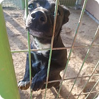 Adopt A Pet :: Binney - Oakton, VA