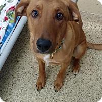 Adopt A Pet :: Jake - Scituate, MA