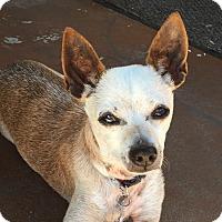 Adopt A Pet :: Wallace - San Diego, CA