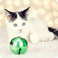 Adopt A Pet :: Sundae - San Antonio, TX