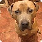 Adopt A Pet :: Cherokee