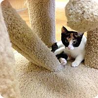 Adopt A Pet :: Hannah - Lake Charles, LA