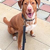 Adopt A Pet :: Sonny - Van Nuys, CA