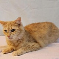 Adopt A Pet :: Peaches - Sebastian, FL