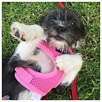 Adopt A Pet :: Cleo aka cleopatra - West LA, CA