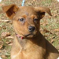 Adopt A Pet :: Cameron - Pewaukee, WI