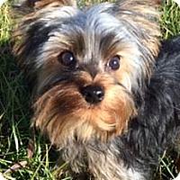 Adopt A Pet :: Packer - Red Bluff, CA