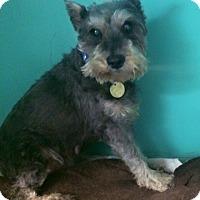 Adopt A Pet :: Sheila - Oak Ridge, NJ