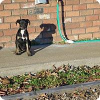 Adopt A Pet :: Lucy - Aurora, CO