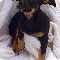 Adopt A Pet :: JANET - Rancho Cucamonga, CA