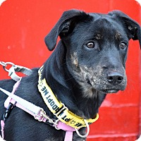 Adopt A Pet :: Scout Finch - Jersey City, NJ