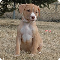 Adopt A Pet :: Rose - Buffalo, WY