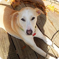 Adopt A Pet :: Mollie - Destrehan, LA