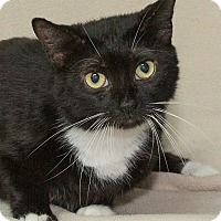 Adopt A Pet :: Roman - Elmwood Park, NJ