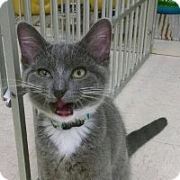 Adopt A Pet :: Cruise - Warren, OH