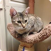 Adopt A Pet :: Mariah - Winchester, CA