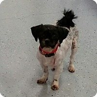 Adopt A Pet :: Daylnn Barkley - Urbana, OH