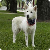 Adopt A Pet :: Magnolia - Houston, TX